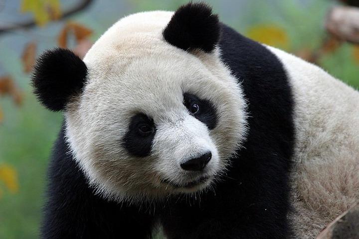 Все квесты от Панда здесь!